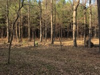 Ultimate Location With Creek : Pattison : Jefferson County : Mississippi