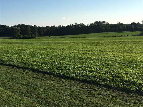 115 Acres On I-65 : Good Hope : Cullman County : Alabama
