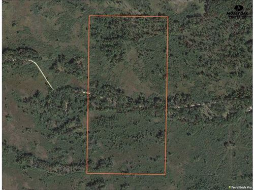 80 Acres of Hunting Land in Adams : Coloma : Adams County : Wisconsin