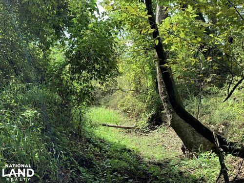 40 Acres of Deer Thicket : Grayson : Caldwell Parish : Louisiana
