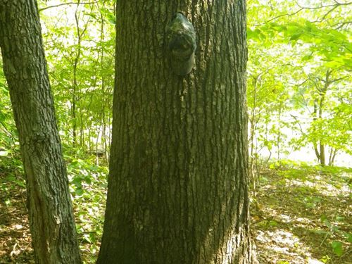 39.81 Acres of Mature Timber Near : Finley : Taylor County : Kentucky