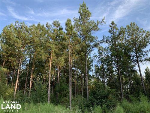 Kimbrough Highway 5 Cord Credit Tim : Kimbrough : Wilcox County : Alabama