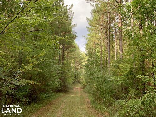 Pine Hill Above Average Timber & Hu : Pine Hill : Wilcox County : Alabama
