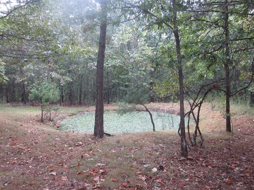 Ozark Land With Well Septic Site : Yellville : Marion County : Arkansas