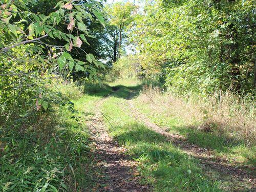 120 Acre Pine County Hunting Land : Grasston : Pine County : Minnesota