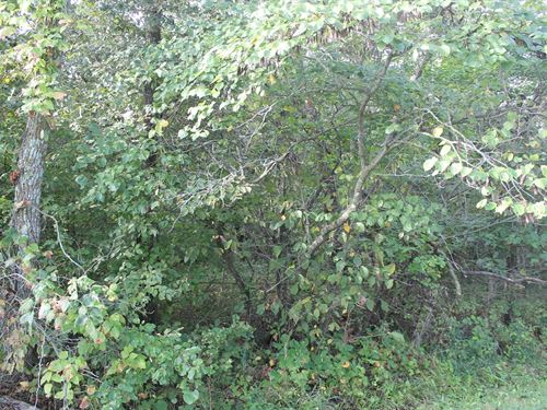 Daviess County MO 40 Acres For Sale : Hamilton : Daviess County : Missouri