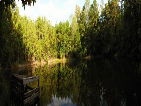 Bitter Root : Chattahoochee : Gadsden County : Florida