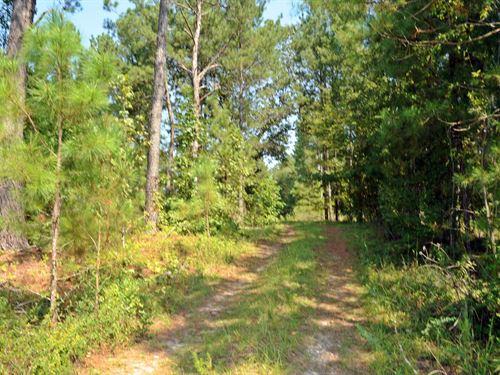 Recreational Timberland : Wallace : Marlboro County : South Carolina
