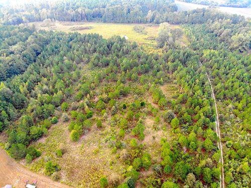 10.34+/- Acre Minifarm : Rome : Floyd County : Georgia