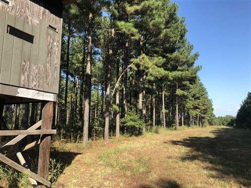 Incredible Hunting on 30 Acres : Bald Knob : White County : Arkansas