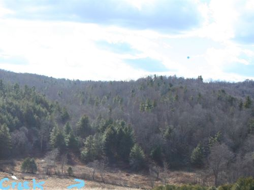 Wooded Recreational Property Floyd : Floyd : Virginia