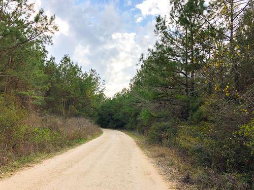 244 Ac Tom Marsh Road Segno Forest : Livingston : Polk County : Texas