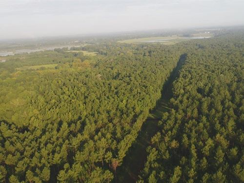 Bodka Creek Tract : Geiger : Sumter County : Alabama