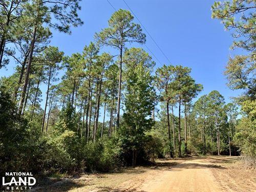 Cotton Creek Big Timber And Hunting : McDavid : Escambia County : Florida