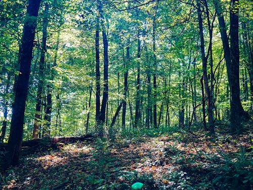 Tr 90, 7 Acres : Killbuck : Holmes County : Ohio