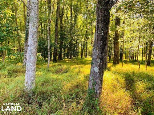 Kirkland Cemetary Road Recreation : Camden : Kershaw County : South Carolina