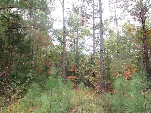 Over 80 Acres In Southern VA : Kenbridge : Lunenburg County : Virginia
