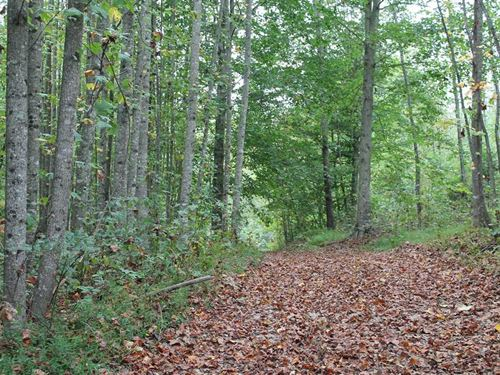 42.5 Acres in Macon County, Tennes : Red Boiling Springs : Macon County : Tennessee