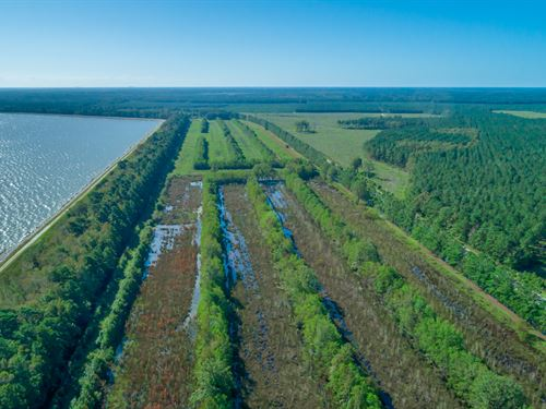 The Crawfish Farm Trac : Moncks Corner : Berkeley County : South Carolina