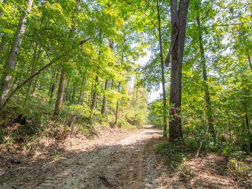 Pelfrey Rd, 20 Acres : Ray : Vinton County : Ohio