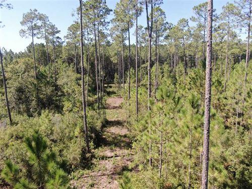 40.55 Acres Oregon Trail Greenvill : Greenville : Madison County : Florida