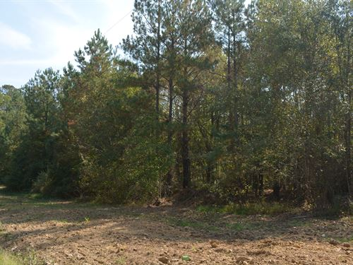 Unrestricted Large 28 Acre Tract : Pittsboro : Chatham County : North Carolina