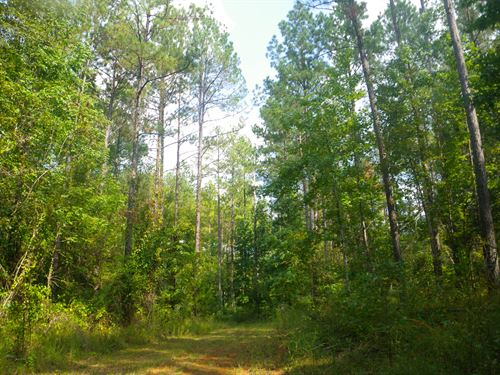 Oak Hill Tract, South Of Hwy 10 : Pine Apple : Wilcox County : Alabama