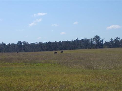 Shores Road Farm : Alford : Jackson County : Florida