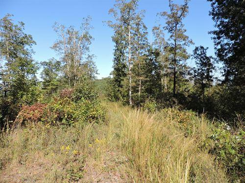 Wooded Mountaintop Acreage Buffalo : Kingston : Madison County : Arkansas