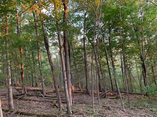 35 Acres Secluded Hunting : Clifton : Wayne County : Tennessee