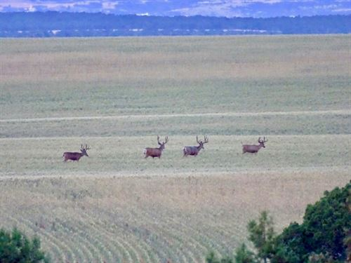 San Miguel Range 603 : Egnar : San Miguel County : Colorado
