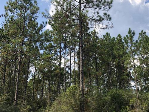 20 +/- Baldwin County : Seminole : Baldwin County : Alabama