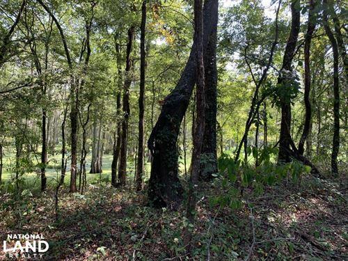 Bayou Bonne Idee Duck And Deer Hunt : Bonita : Morehouse Parish : Louisiana