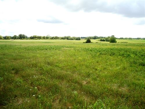 Farm Land For Sale in Southern Mo : Mansfield : Wright County : Missouri