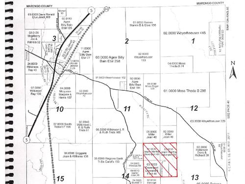 Fire Tower Road Timber Tract : Lamison : Wilcox County : Alabama