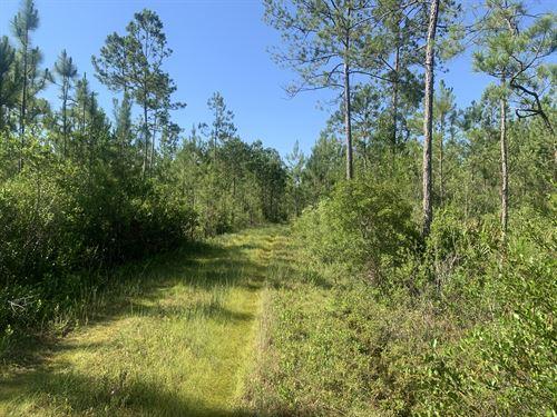 Jim French Road, Longleaf Tract : Crawfordville : Wakulla County : Florida