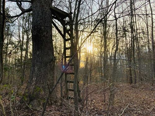 722 Acres of Timberland Loaded Wit : Paris : Henry County : Tennessee