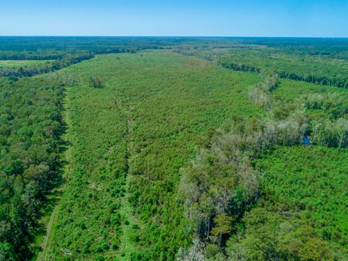 Cypress Swamp Tract : Summerville : Berkeley County : South Carolina
