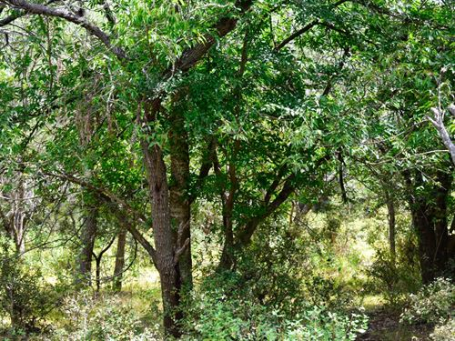 10 Ac Near Austin W/Owner Financing : Lockhart : Caldwell County : Texas