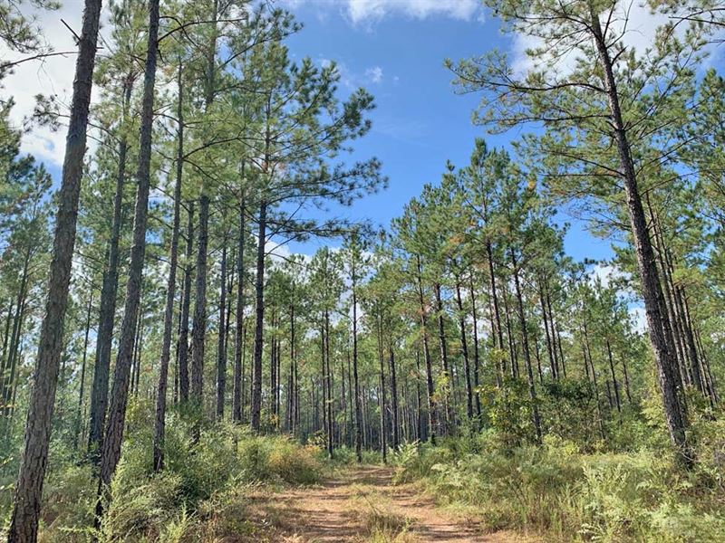 Foster Road Tract : Wagarville : Washington County : Alabama