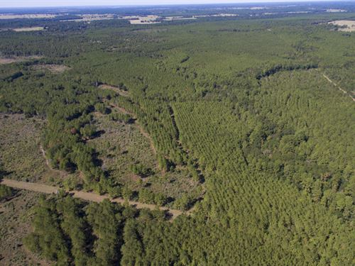 194 Acres Bo Brown Rd Tract 3 : Trinity : Walker County : Texas