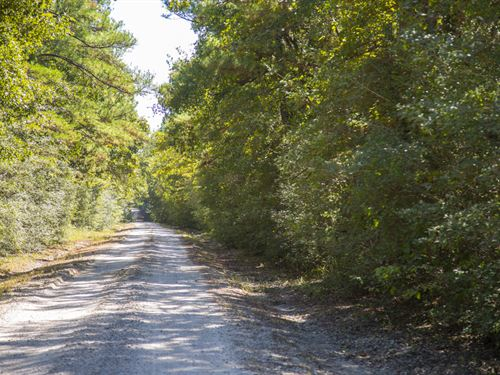 150 Acres Bo Brown Rd Tract 2 : Trinity : Houston County : Texas