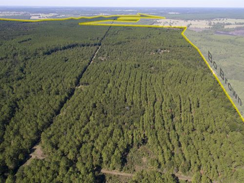 183 Acres Bo Brown Rd Tract 1 : Trinity : Houston County : Texas