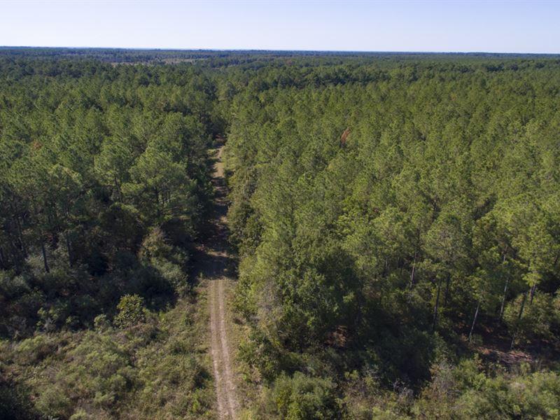 2560 Acres Fm 230 Tract 9 : Trinity : Walker County : Texas