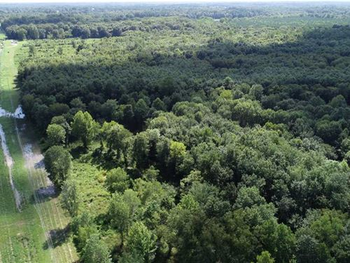 135 Acres in Alcorn County, Missis : Corinth : Alcorn County : Mississippi