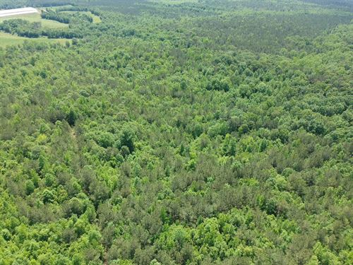 60+/- Wooded Acres : Wadley : Clay County : Alabama