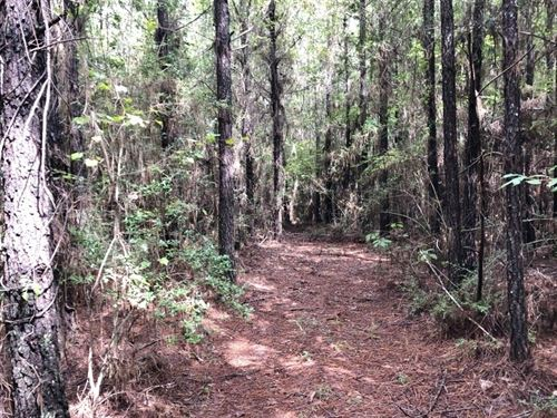 53 Acres Hunting Timber Land For Sa : Magnolia : Amite County : Mississippi