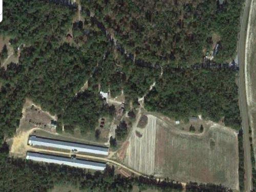 Poultry Farm : Blackville : Barnwell County : South Carolina