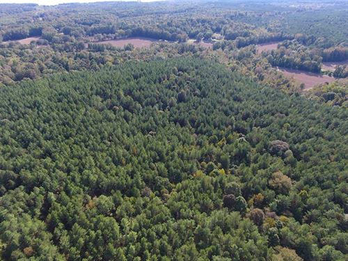 Hunting Land, Grenada Lake Area : Coffeeville : Grenada County : Mississippi
