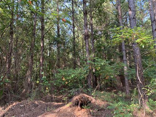 85 Acres Investment Timberland : Aliceville : Pickens County : Alabama